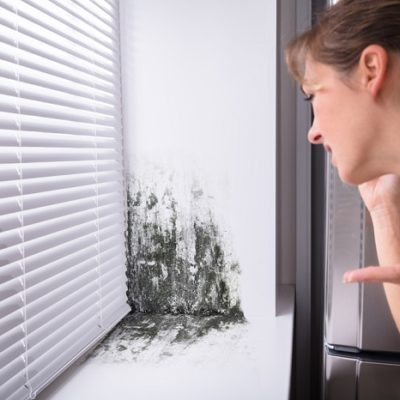 Don't Let Mold Spore You Around